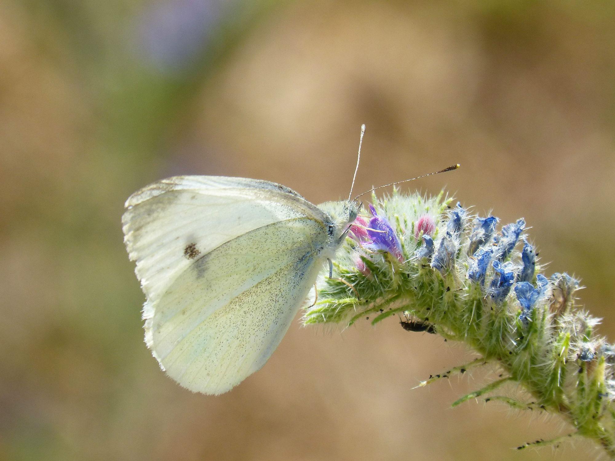 butterfly-1484502