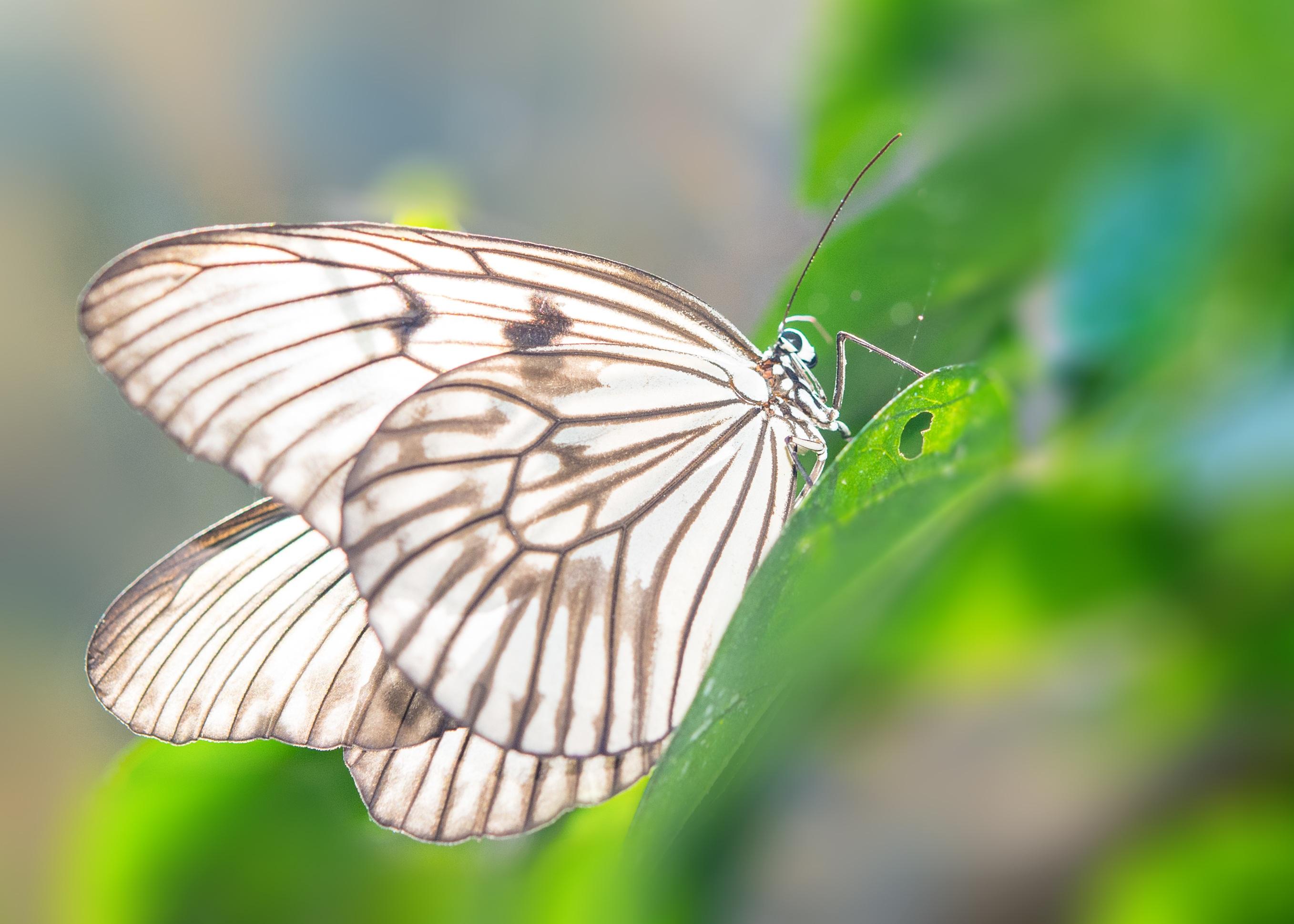 butterfly-2896892